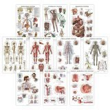 Palace Learning Anatomical Poster Set (Laminated 10-Pack)