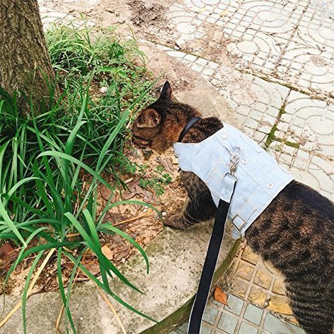 Cat Jeans Jacket Harness Vest